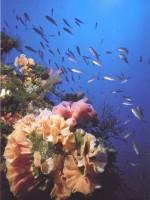immagine mare vivo